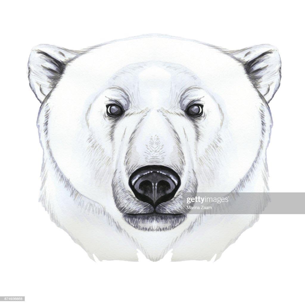 Dessin Avec Aquarelle De Predateur Mammifere Ours Polaire Artic