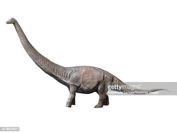 Dreadnoughtus is a sauropod dinosaur from the Late Cretaceous period of Argentina.