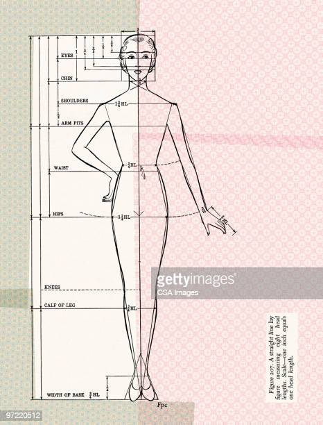dressmaking form - fashion stock illustrations