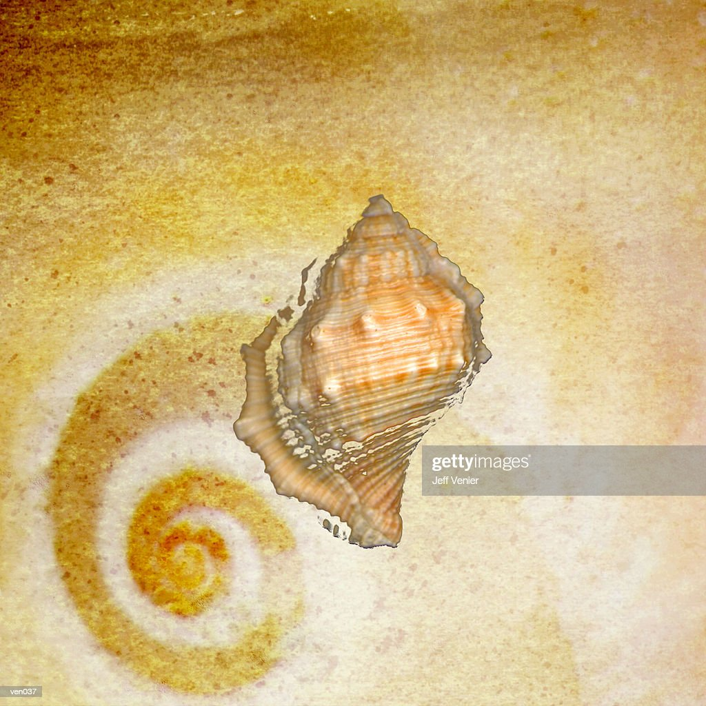 Drill Shell with Snail Background : Ilustración de stock