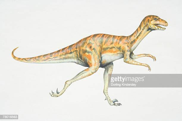 Dromaeosaurus, red and black striped dinosaur with strong hind legs, side view.
