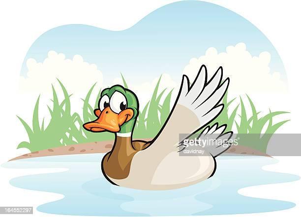 duck swim - duck stock illustrations, clip art, cartoons, & icons