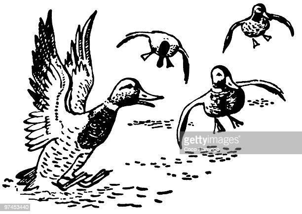 ducks landing in pond - animal limb stock illustrations, clip art, cartoons, & icons