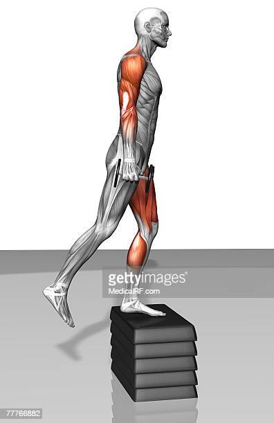 dumbbell step-up exercise (part 1 of 2) - step aerobics stock illustrations, clip art, cartoons, & icons