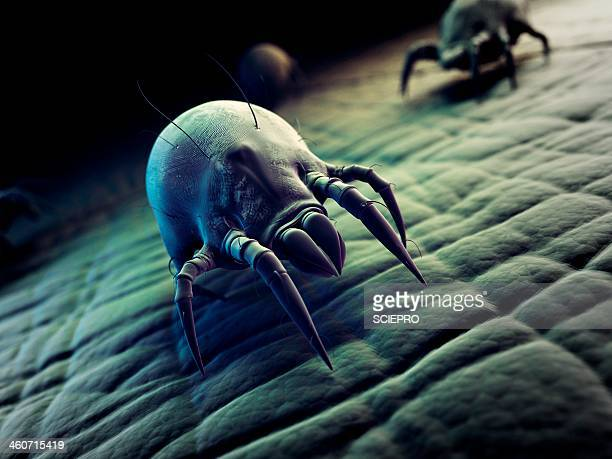 dust mite, artwork - 膝から上の構図点のイラスト素材/クリップアート素材/マンガ素材/アイコン素材