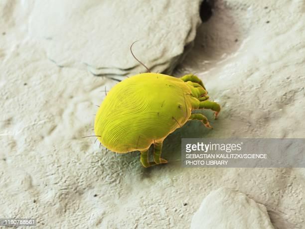 dust mite, illustration - eczema stock illustrations