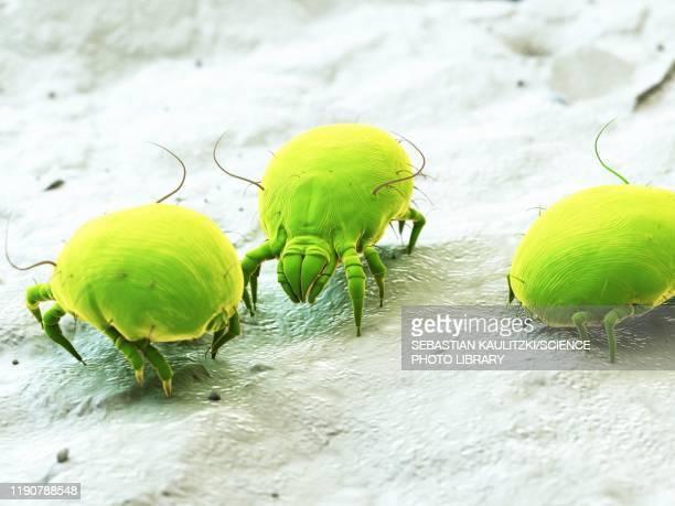 dust mites, illustration - eczema stock illustrations