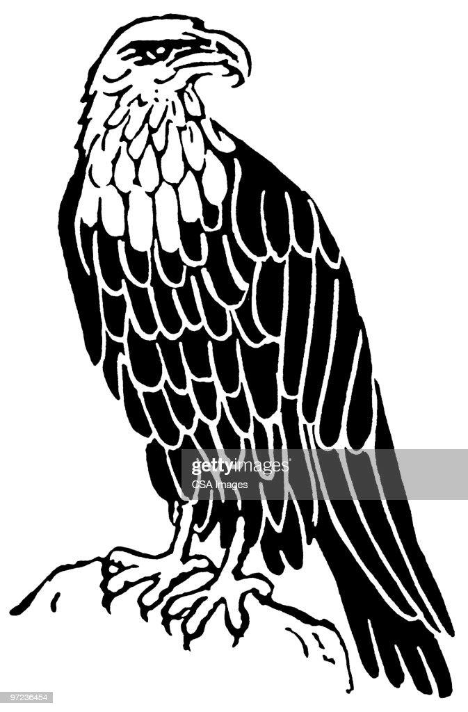 Eagle : Stock Illustration