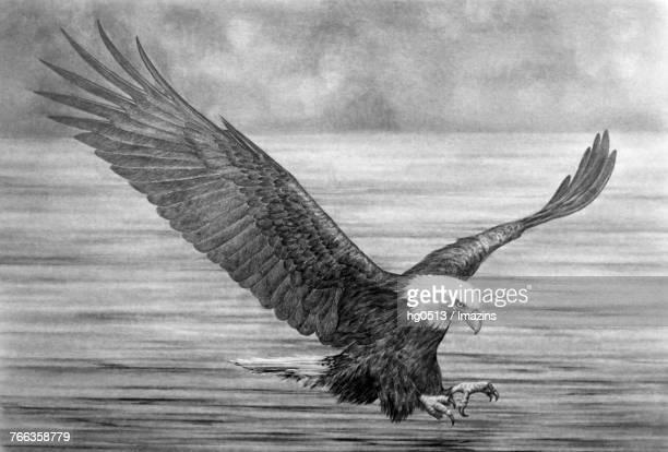 eagle pencil drawing - animal limb stock illustrations, clip art, cartoons, & icons