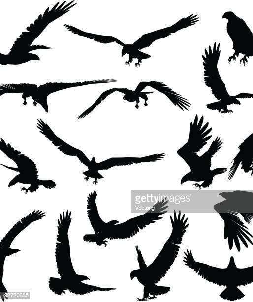 eagle silhouette - hawk bird stock illustrations, clip art, cartoons, & icons