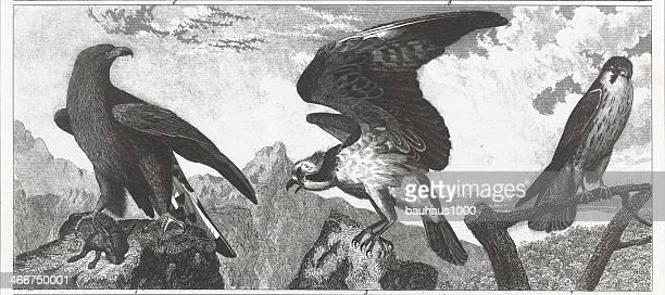 eagles engraving - bird of prey stock illustrations, clip art, cartoons, & icons
