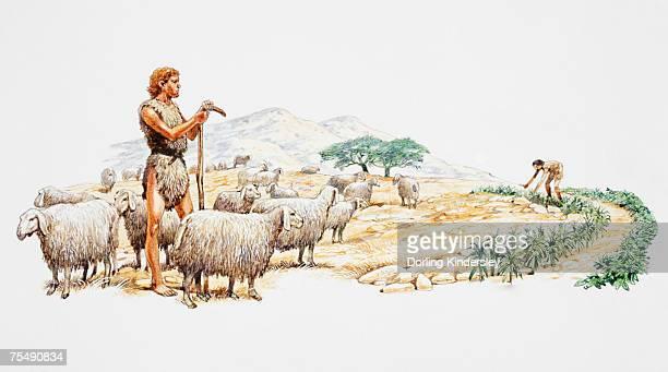 illustrazioni stock, clip art, cartoni animati e icone di tendenza di early man tending to flock of sheep, tending to crops - homo sapiens