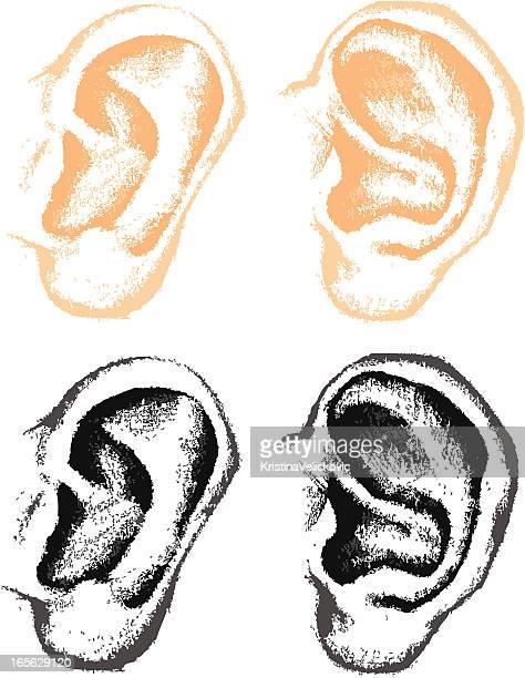 ilustraciones, imágenes clip art, dibujos animados e iconos de stock de las orejas - oreja humana