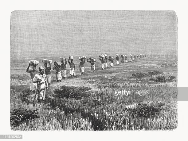 illustrations, cliparts, dessins animés et icônes de convoi d'afrique de l'est avec porteurs, gravure sur bois, publié en 1897 - afrique paysage