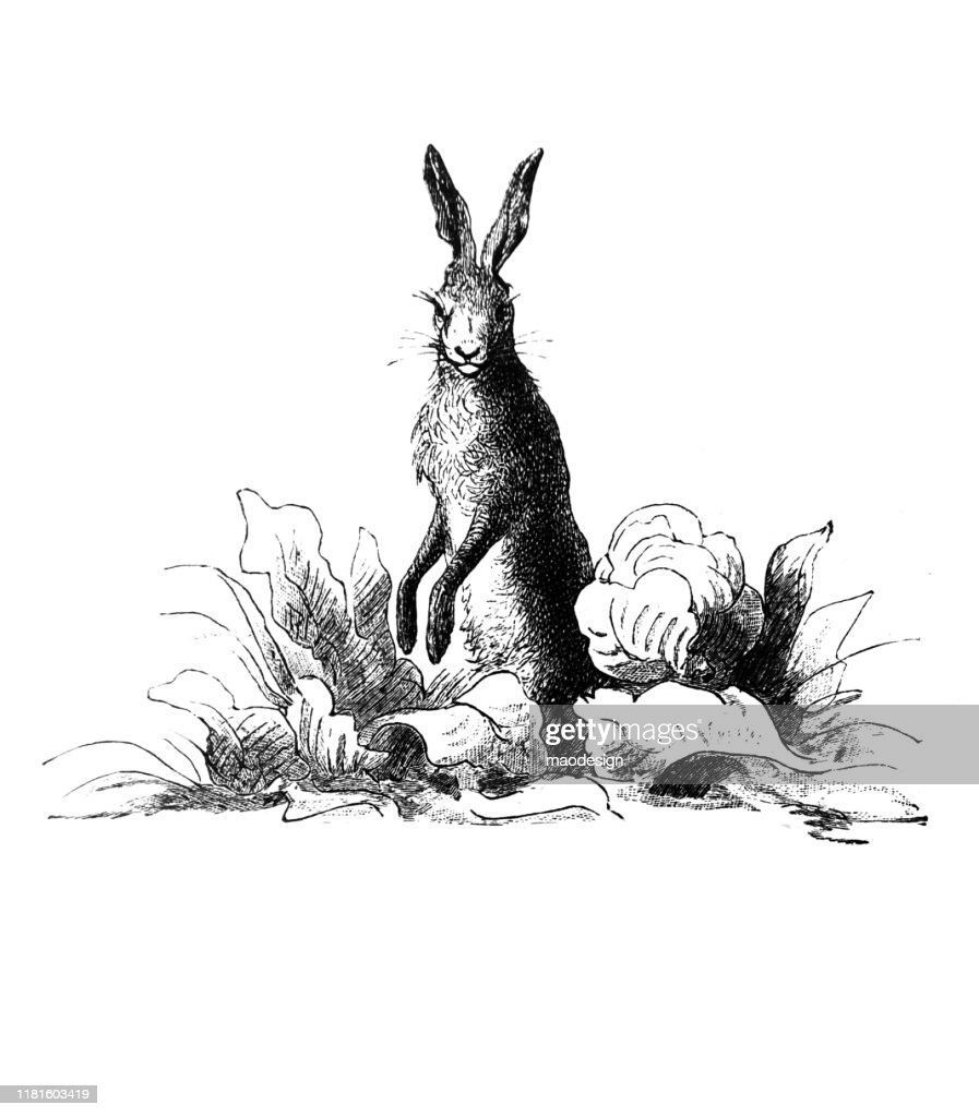 Easter rabbit on a meadow : Illustrazione stock