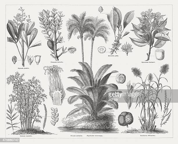 Economic plants, wood engravings, published in 1876
