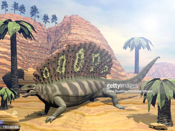 Edaphosaurus dinosaur walking in the desert among bjuvia trees.