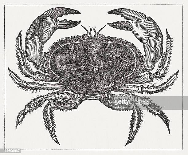 Edible crab (Cancer pagurus), wood engraving, published in 1865