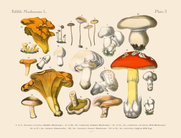 Edible Mushrooms, Victorian Botanical Illustration Wall Art