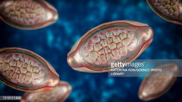 eggs of a parasitic worm trichuris trichiura, illustration - zoonotic diseases点のイラスト素材/クリップアート素材/マンガ素材/アイコン素材