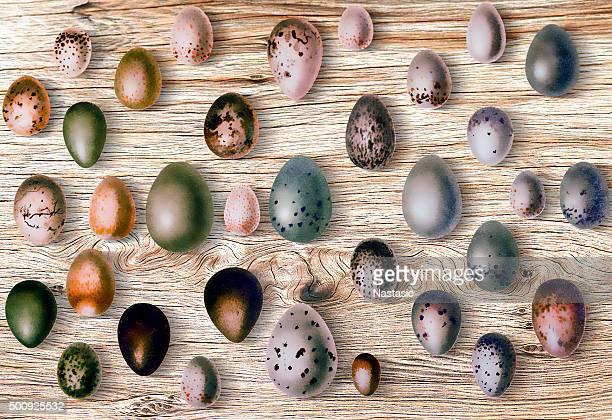 ilustraciones, imágenes clip art, dibujos animados e iconos de stock de huevos de pájaros en frente de fondo de madera - biodiversidad