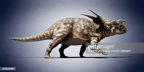 Einiosaurus, illustration