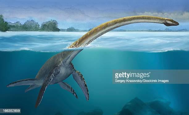 ilustraciones, imágenes clip art, dibujos animados e iconos de stock de elasmosaurus platyurus, a prehistoric dinosaur from the cretaceous period. - plesiosaurio