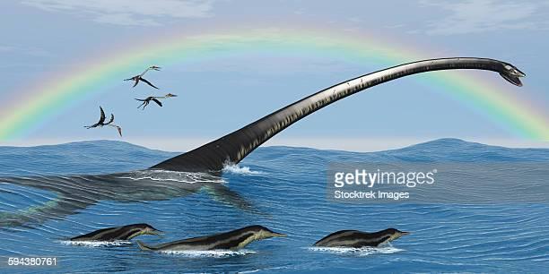 ilustraciones, imágenes clip art, dibujos animados e iconos de stock de elasmosaurus tries to capture a dolichorhynchops reptile. - criptozoología