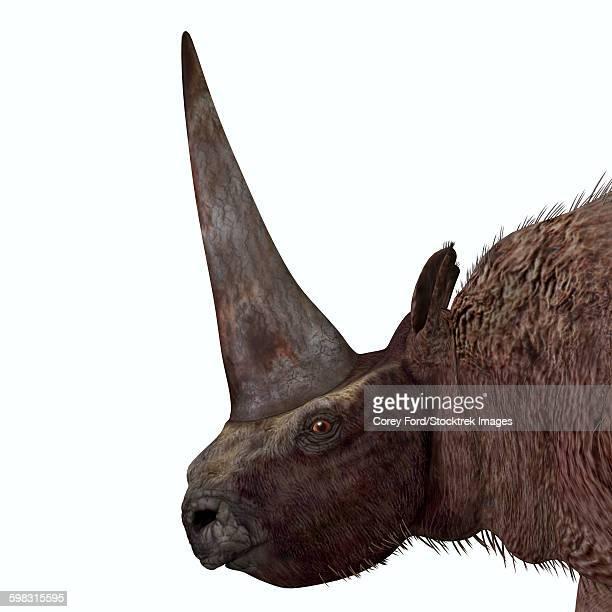 Elasmotherium portrait.