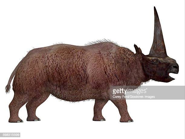 Elasmotherium profile view.