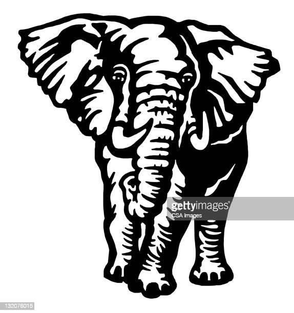 30 Meilleurs Elephant Noir Et Blanc Illustrations Cliparts