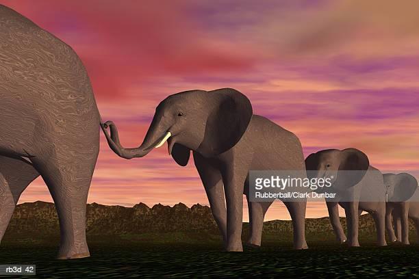 elephants walk forward single file against a sunset sky