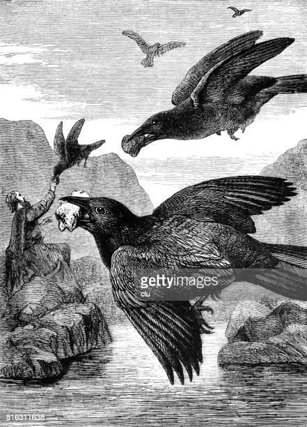 Elija getting food by raven