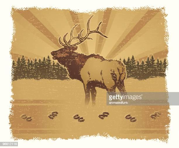 elk grunge - elk stock illustrations