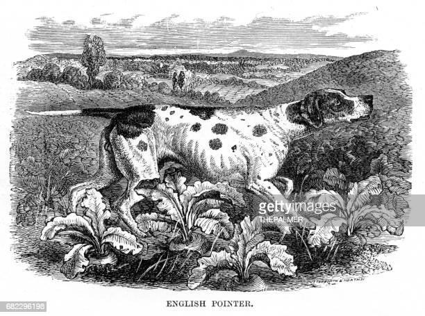 english pointer engraving 1894 - pointer dog stock illustrations