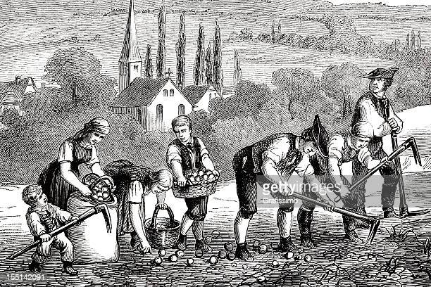 Engraving farmers harvesting potato field 1835