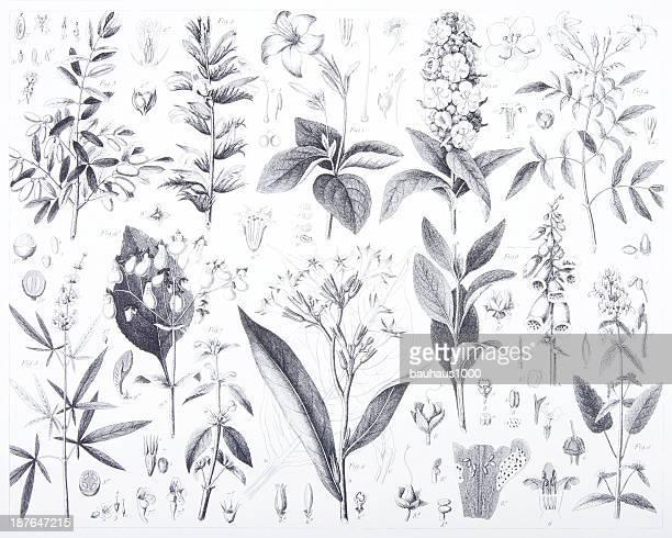 彫り込み: 花と植物