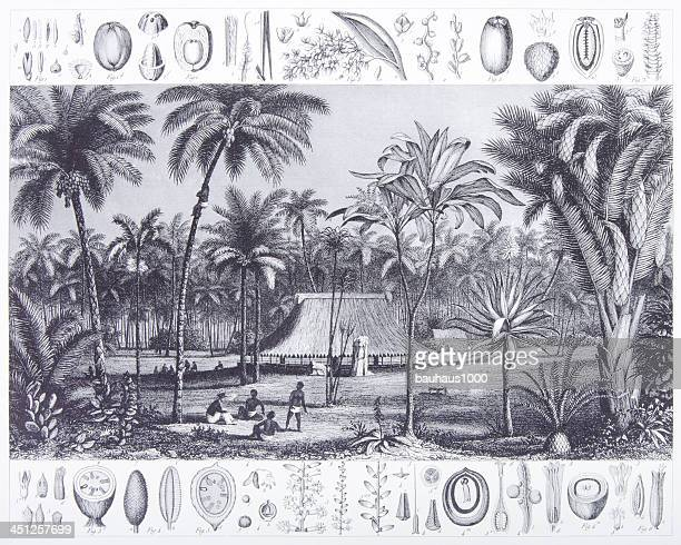 Engraving: Habitat Grouping: Palms and Cycads