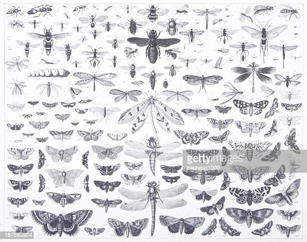 engraving: lepidoptera - odonata stock illustrations, clip art, cartoons, & icons