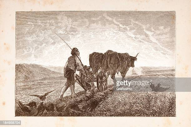 engraving men plowing a field with two cows - 18th century stock illustrations