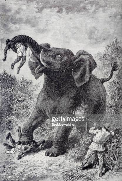 engraving of a wild elephant  attacking it's hunters - animals charging stock illustrations, clip art, cartoons, & icons