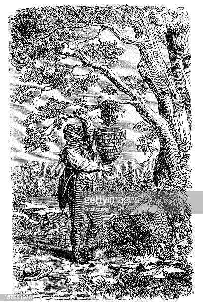 Engraving of beekeeper reaping honey