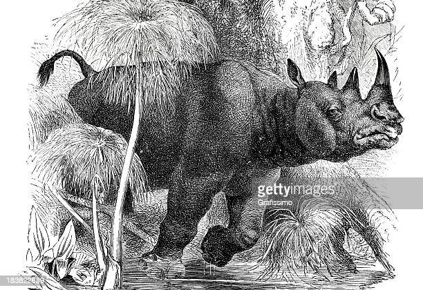 engraving of rhinoceros in jungle from 1870 - historical document stock illustrations, clip art, cartoons, & icons