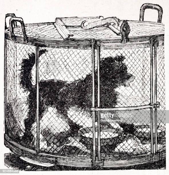 Engraving Pasteur animal testing in 1890