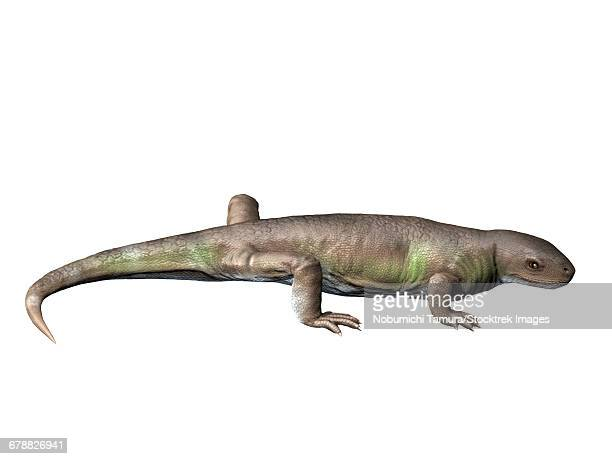 Eocasea is a synapsid from the Late Carboniferous period of Kansas.