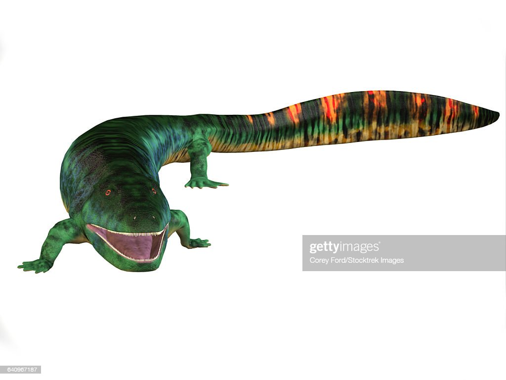 Eogyrinus aquatic tetrapod on white background. : stock illustration