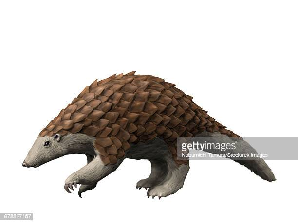 illustrations, cliparts, dessins animés et icônes de eomanis waldi is a pangolin from the eocene epoch of germany. - pangolin