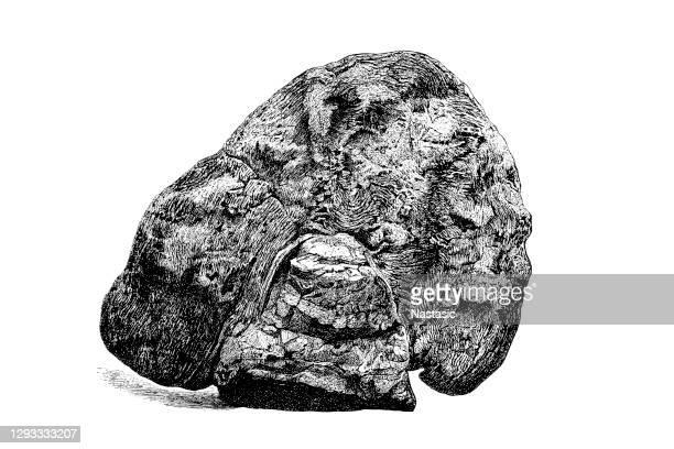 エオズーンカナデンセは疑似化石 - 方解石点のイラスト素材/クリップアート素材/マンガ素材/アイコン素材