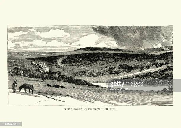 epping forest, from high beech, 19th century - essex england stock illustrations