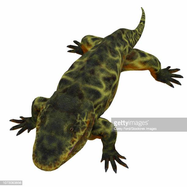 Eryops on white background.